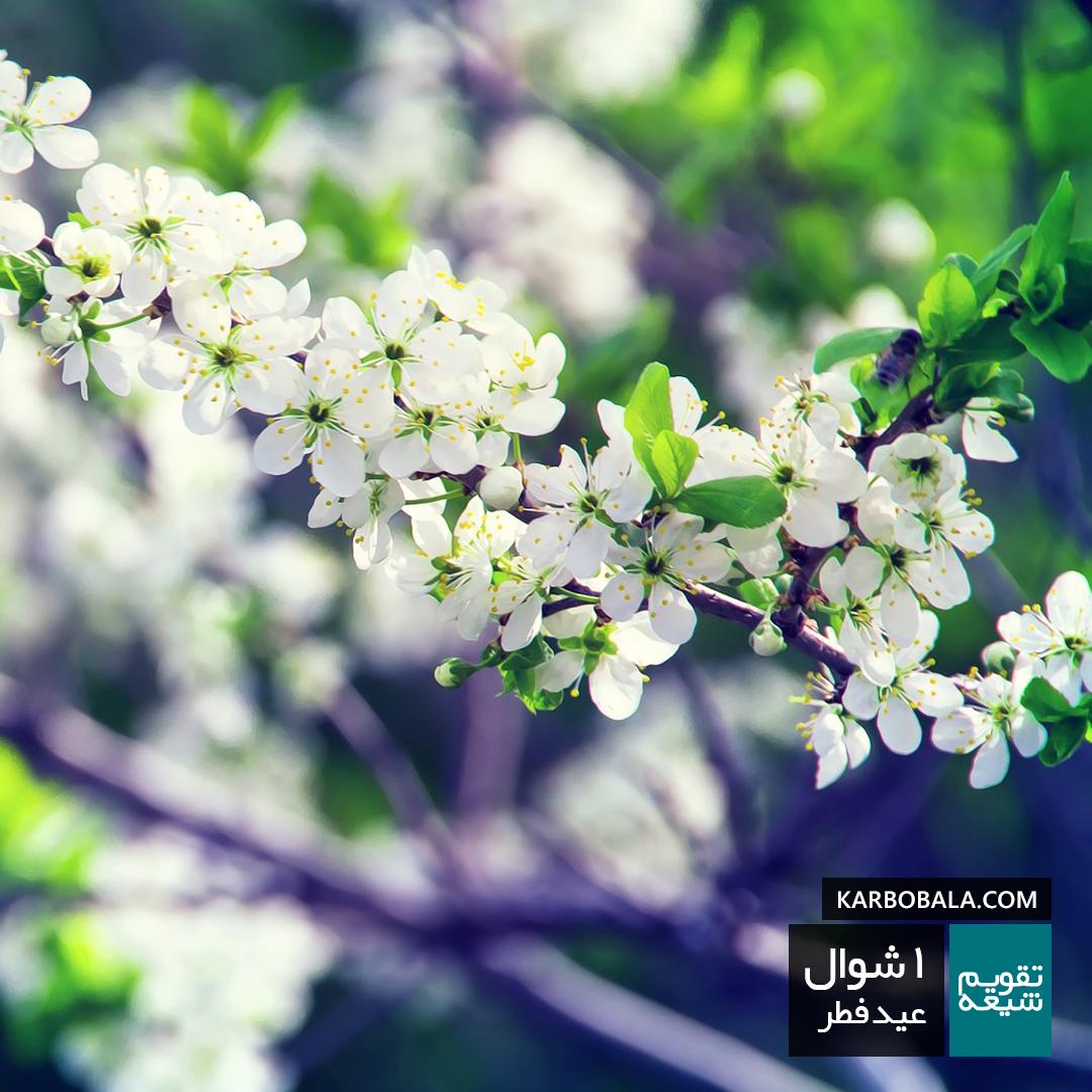 1 شوال / عید فطر