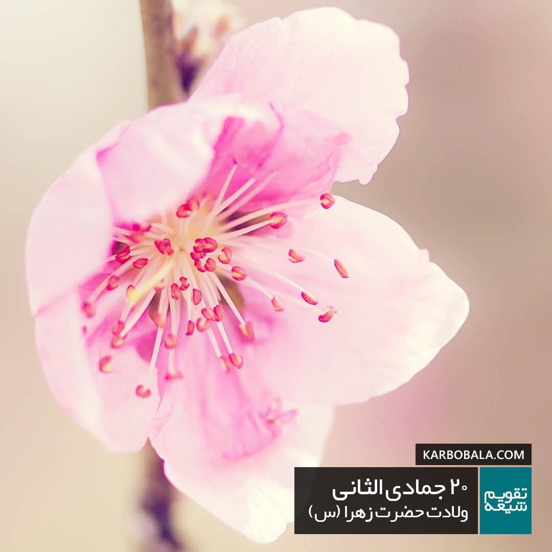 20 جمادی الثانی / ولادت حضرت زهرا (س)