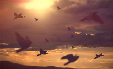 یاران امام حسین علیه السلام چند نفر بودند؟