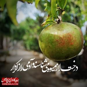 همراه با کاروان حسینی تا اربعین / بیستم و پنجم ذیالحجه