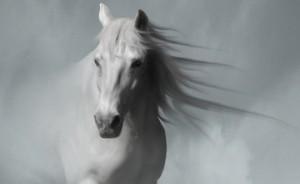 داستان اسب امام حسین (ع) در روز عاشورا
