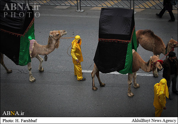 ورود نمادین کاروان امام حسین علیهالسلام به کربلا / گالری تصویر