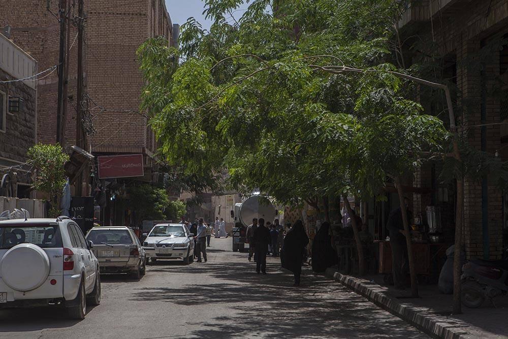 درختکاری خیابانها و معابر کربلا یکی از پروژههای مهم آستان مقدس عباسی
