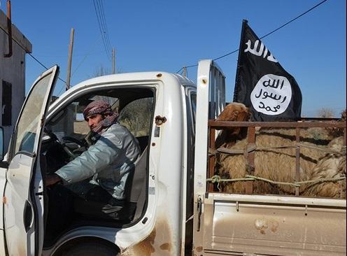 داعش به زور زکات میگیرد