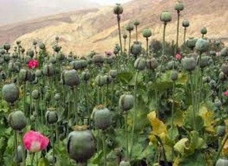 گروه تروریستی داعش و قاچاق مواد مخدر