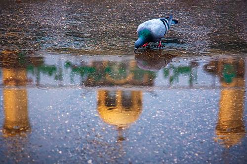 حال و هوای یک روز بارانی در بینالحرمین / گزارش تصویری