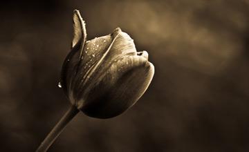 گلچین اشعار به مناسبت نخستین سالگرد درگذشت علی باقرزاده «بقا» در18 آذر