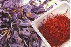 هشدار به حجاج و زائران عتبات در مورد خرید زعفران