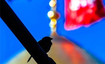 دل من چون کبوتری پر میکشد به سوی تو / گزارش تصویری