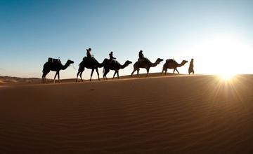 چرا همسر حضرت زینب (س) امام حسین (ع) را در سفر به کربلا همراهی نکرد؟